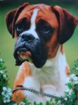 Boxer Dog Blank Greetings Cards (10 Pack)